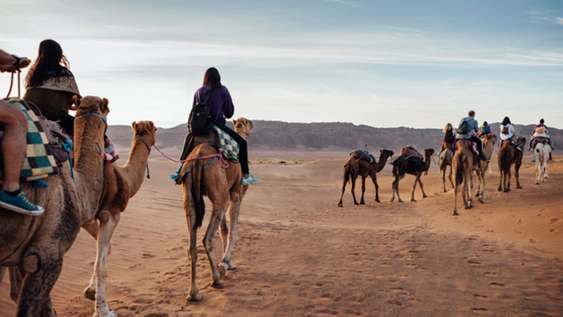Travelers riding on camels in the desert